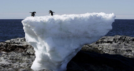 As Antarctic ice shrinks from climate change, will Adélie penguins disappear?