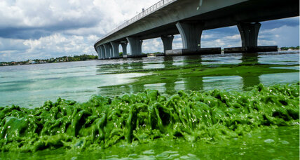 What's behind Florida's algae bloom? Satellite photos reveal clues.