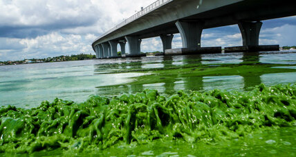 Got muck? Florida residents can report algae blooms with new hotline.