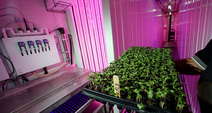 Can you grow vegetables on a submarine? US Navy aims to find out.