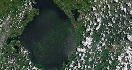 How satellites are helping us combat algal blooms
