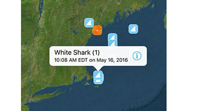 Sharks near the beach? There's an app for that.