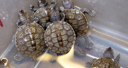 New Jersey politicians find a bipartisan cause: protecting turtles