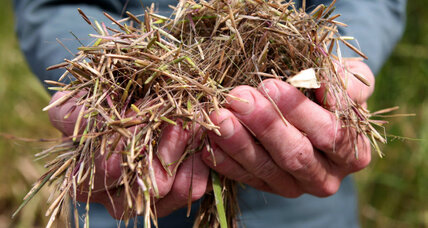 Minnesota mine, environmentalists face off over wild rice