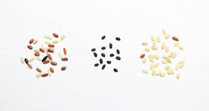 Scientists probe ancient grains of rice and are surprised by what they find