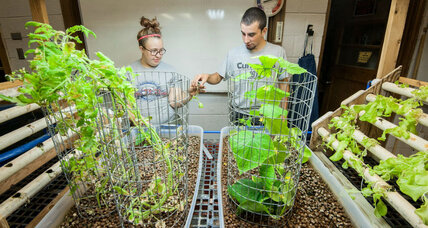 Food insecurity lessened through the use of aquaponics