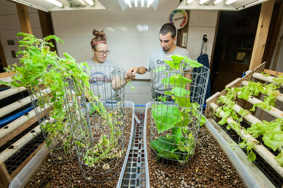 London's GrowUp Urban Farms taps potential of aquaponics to grow food