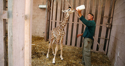 England's Paignton Zoo: Tapping vertical farming to feed animals