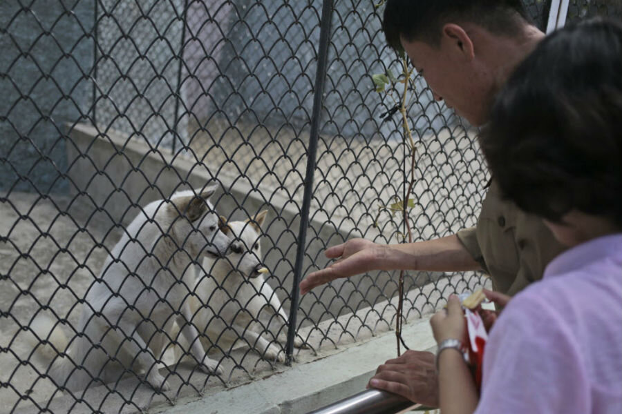 Dogs In The Pyongyang Zoo Are They North Koreans New Best Friend Csmonitor Com