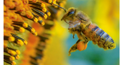 Long-term study shows pesticides are killing bees