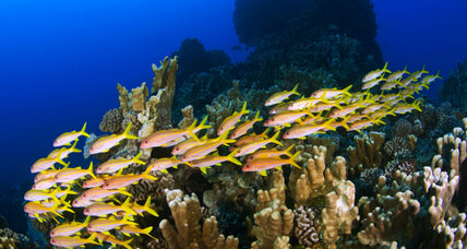 Why healthy coral reefs need fish urine