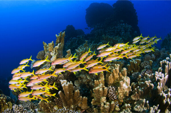 Why healthy coral reefs need fish urine for Healthiest types of fish