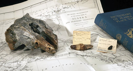 Smithsonian finds extinct river dolphin skull in its collection