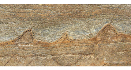 Could these be the world's oldest fossils?