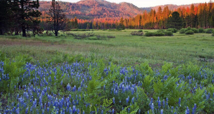 Yosemite adding 400 acres of meadow, forest
