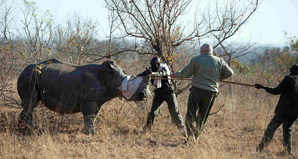 Rhino poaching declines in South Africa's largest park
