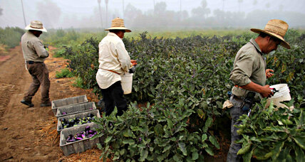 California's agricultural workers' overtime law victory hailed as 'historic'