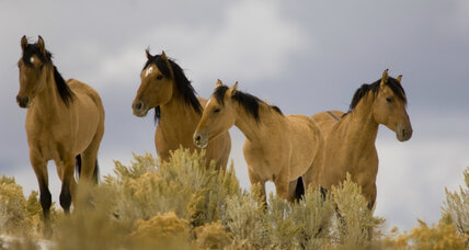 Would the US government consider killing 44,000 wild horses?