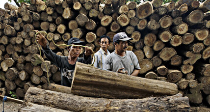 How an EU license may help heal Indonesia's deforestation
