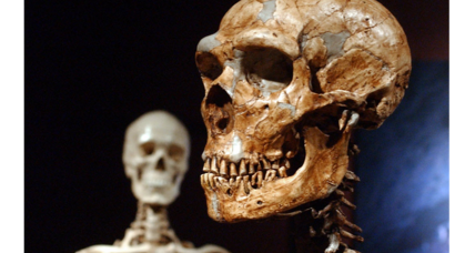 Could Neanderthals hear the same sounds as humans?