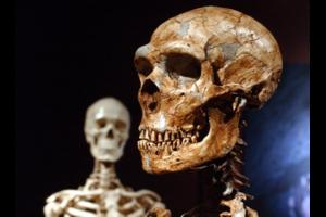 1005189_1_0926-neanderthal-human_standar