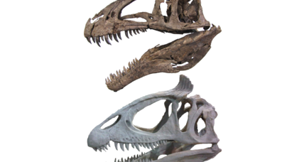 Could ornamented skulls have helped dinosaurs get big?