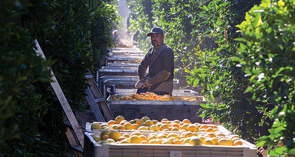 Sustainable agriculture deserves center stage in Marrakech