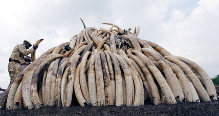 Botswana's change of heart scuttles bid to revive ivory trade