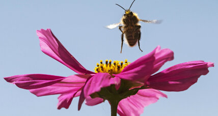 Bees awe scientists with by displaying learning and teaching skills