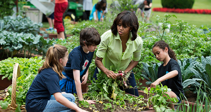 Will this be the last harvest for Michelle Obama's White House garden?