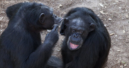 Reading minds? All great apes might be able to see others' points of view