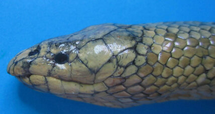 What can we learn about salinity from venomous sea snakes?