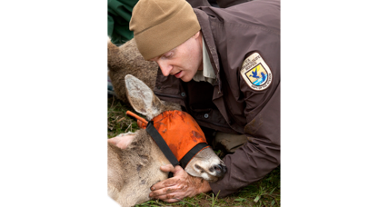 Back from the brink: Endangered deer subspecies downlisted