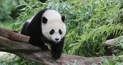 D.C. says fare thee well, Bao Bao, following China's panda-renting rules