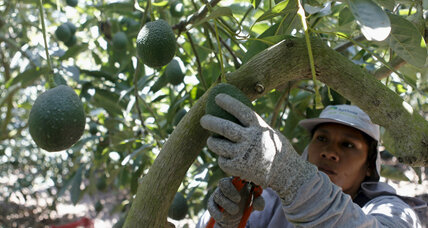 Avocados shortage? US prices surge amid Mexican strike.