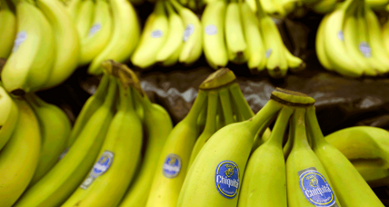 Yes, we might have no bananas. Can science prevent the fruit's extinction?