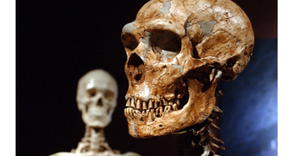 Why don't humans have more Neanderthal DNA?