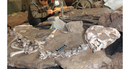 'Mud dragon': How a pristine dinosaur fossil was found after dynamite blast