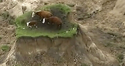New Zealand earthquake: Rescue efforts underway for people and cows