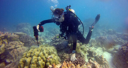 In one more bleached Pacific reef, some corals are 'back from the brink'