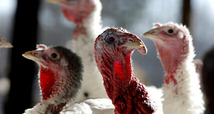 Were native Americans raising turkeys long before the first Thanksgiving?