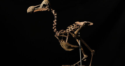 Dodo skeleton auctioned off for $430,000. Why does the bird fascinate?