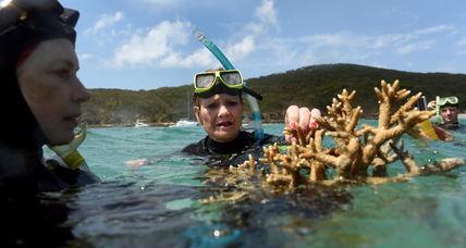 Great Barrier Reef coral die-off reaches tragic, new record (+video)