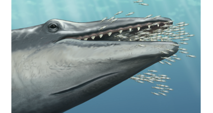 How did baleen whale ancestors lose their teeth?