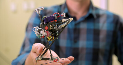 How African bush babies inspired world's most agile jumping robot
