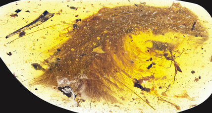 Scientists find a feathery dinosaur tail trapped in amber