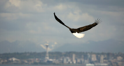 Bald eagle comes off endangered species list in Washington State