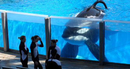 SeaWorld writes a new chapter with the first killer whale-free park