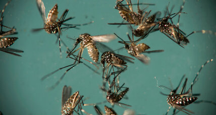 How tracking mosquitoes can shape health policies