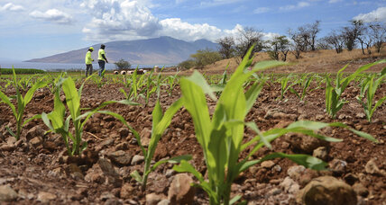 How climate change could affect food prices